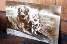 Real Photo Postcard * Dog & Cat *