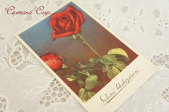 Postcard *Red Rose*