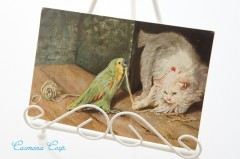 Postcard * Cat and Parrot *