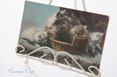 Postcard * Cats and Basket *